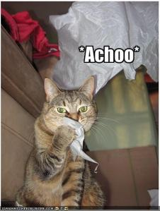 funny-pictures-polite-cat-sneezes-into-a-tissue