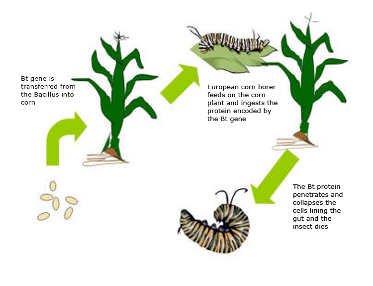 Conventional Farming vs Organic Farming Conventional Farming Also