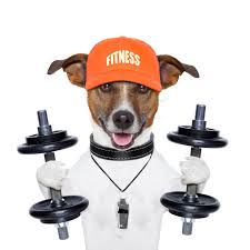 dogexercise