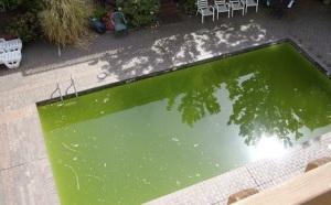 green-swimming-pool