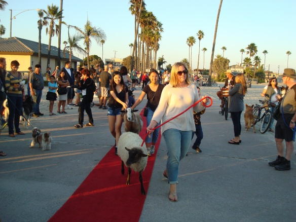 Blessing of the animals 2014 025