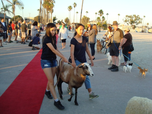 Blessing of the animals 2014 026