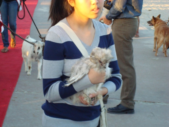 Blessing of the animals 2014 030