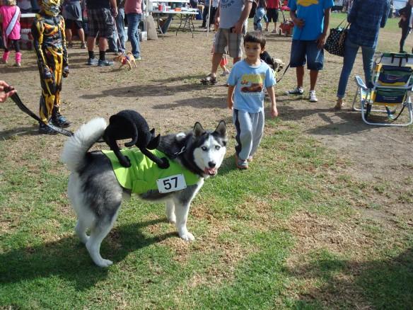 Howlloween Pet Parade 2014 005