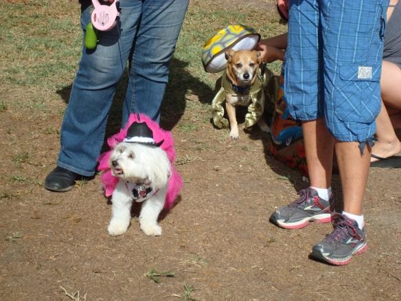Howlloween Pet Parade 2014 023