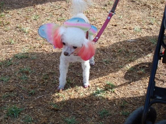 Howlloween Pet Parade 2014 025