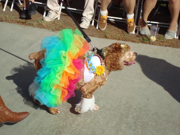 Howlloween Pet Parade 2014 031