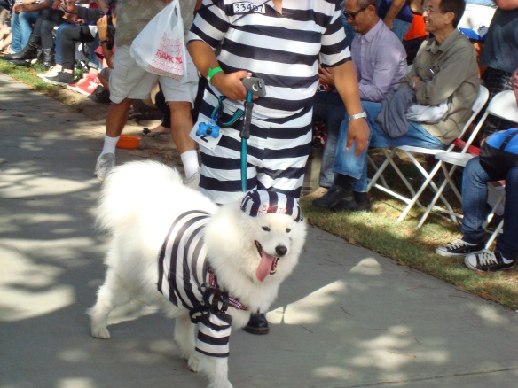 Howlloween Pet Parade 2014 044
