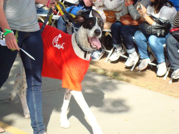 Howlloween Pet Parade 2014 045