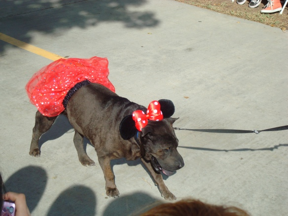 Howlloween Pet Parade 2014 047