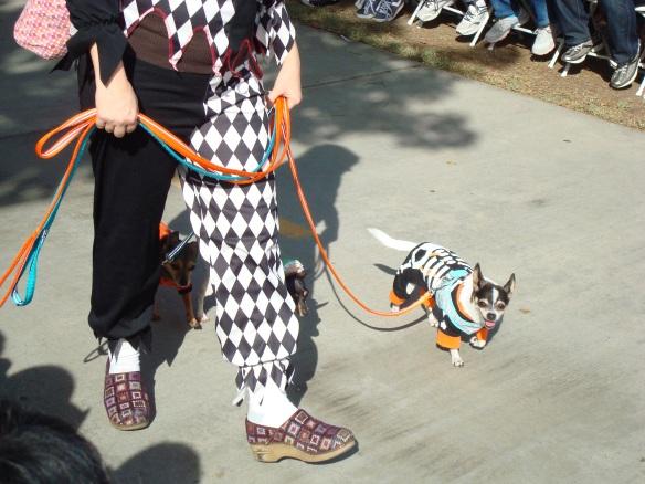 Howlloween Pet Parade 2014 048