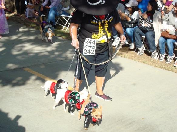 Howlloween Pet Parade 2014 054