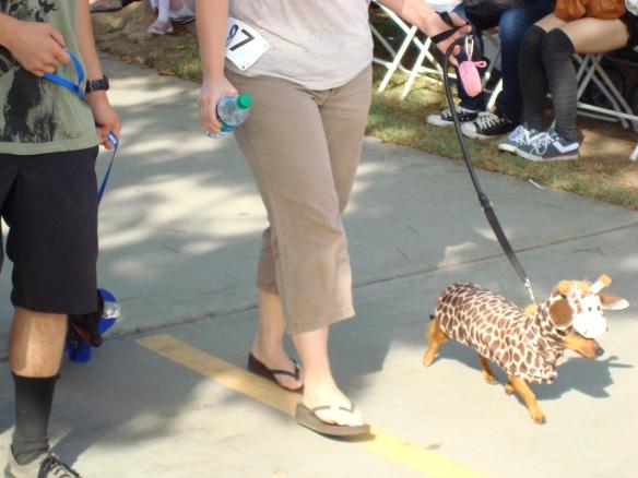 Howlloween Pet Parade 2014 056