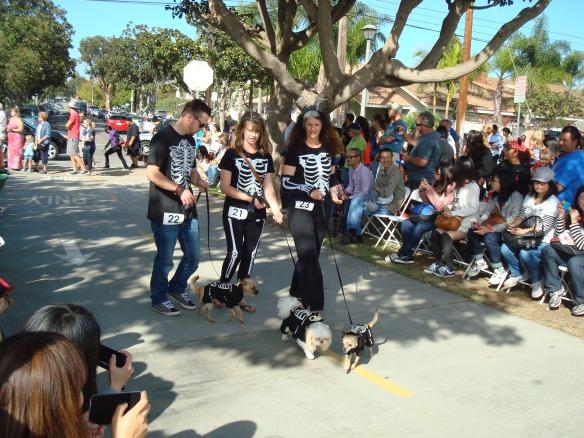Howlloween Pet Parade 2014 058