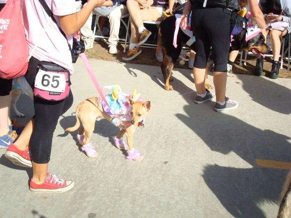 Howlloween Pet Parade 2014 064