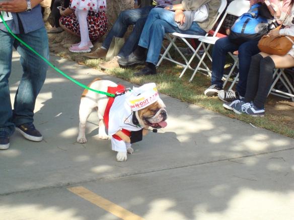 Howlloween Pet Parade 2014 069