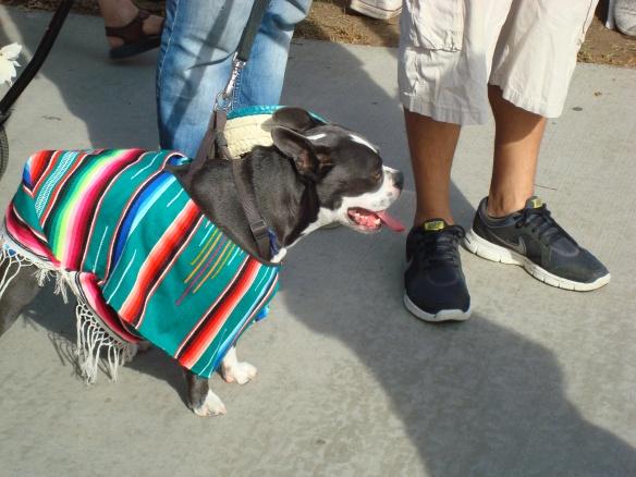 Howlloween Pet Parade 2014 070
