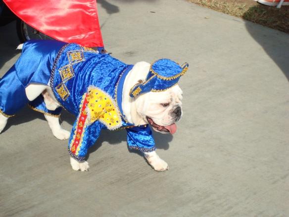 Howlloween Pet Parade 2014 071