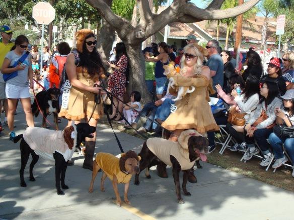 Howlloween Pet Parade 2014 078