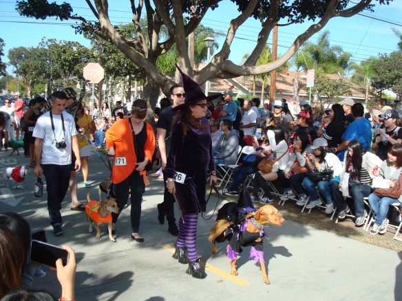 Howlloween Pet Parade 2014 082