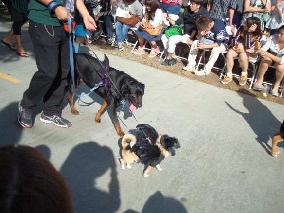Howlloween Pet Parade 2014 085