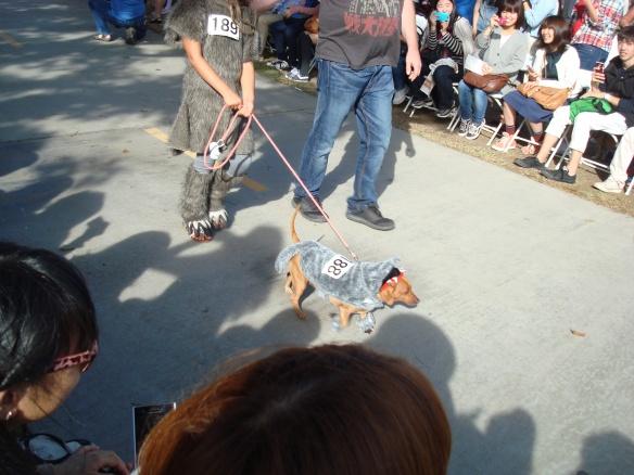 Howlloween Pet Parade 2014 087