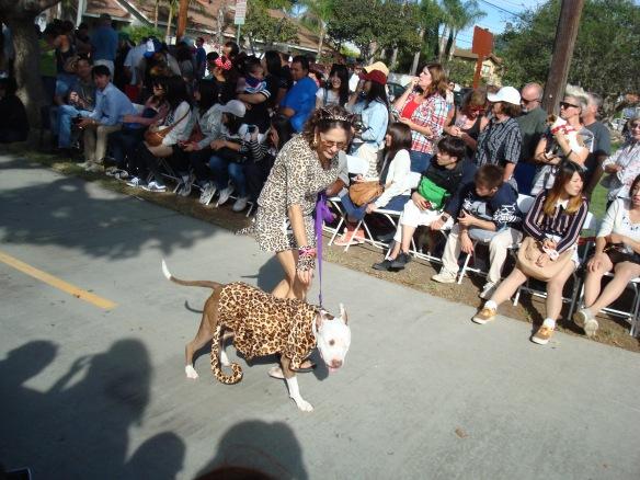 Howlloween Pet Parade 2014 088