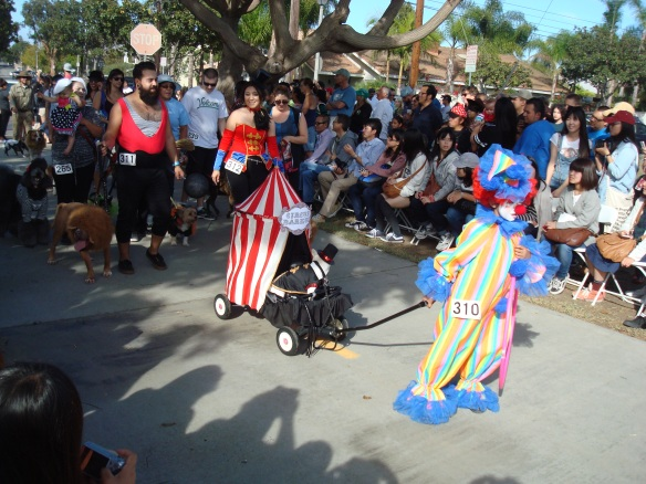 Howlloween Pet Parade 2014 091