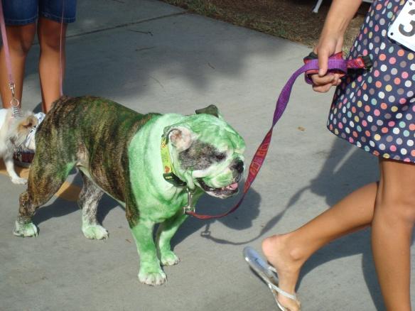 Howlloween Pet Parade 2014 095