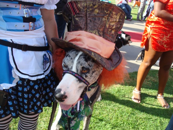 Howlloween Pet Parade 2014 108