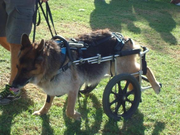 Howlloween Pet Parade 2014 113