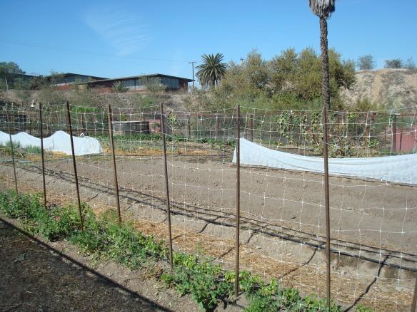 Farm Lot 59 015