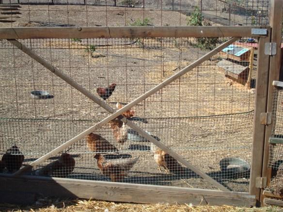 Farm Lot 59 020