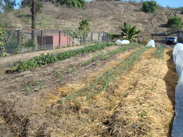Farm Lot 59 028