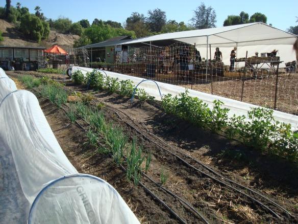 Farm Lot 59 029