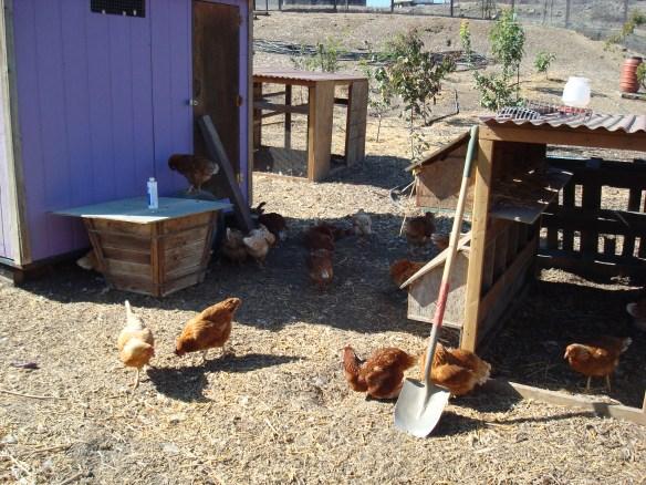 Farm Lot 59 031