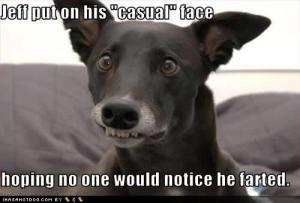 funny-dog-pictures-casual-farted